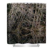 Red Alders 4 Shower Curtain