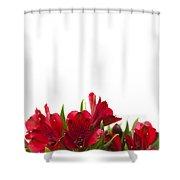 Red Alstroemeria Shower Curtain by Anne Gilbert