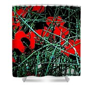Red An Black Poppies 1 Shower Curtain