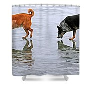 Red And Blue Heelers Shower Curtain