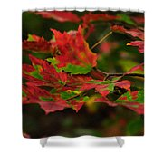 Red And Green Autumn Leaves Shower Curtain