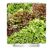 Red And Green Leaf Lettuce  Shower Curtain