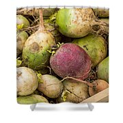 Red And Green Radishes Shower Curtain