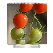 Red And Green Tomatoes Shower Curtain