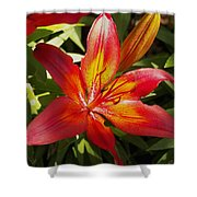 Red And Orange Lilly In The Garden Shower Curtain