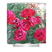 Red And Pink Roses Shower Curtain
