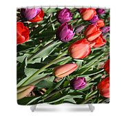 Red And Purple Tulips Shower Curtain