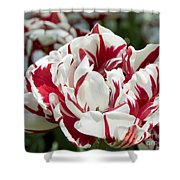 Red And White 6393 Shower Curtain
