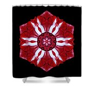 Red And White Amaryllis Iv Flower Mandala Shower Curtain