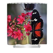 Red And White Longwing Butterflies  Shower Curtain