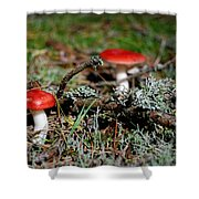 Red And White Mushrooms Shower Curtain