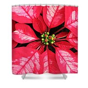 Red And White Poinsettia Shower Curtain