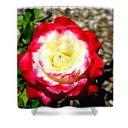 Red And White Rose Shower Curtain