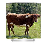 Red And White Texas Longhorn Bull Shower Curtain