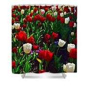 Red And White Tulip Art Shower Curtain