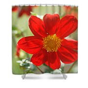 Red And Yellow Beauty Shower Curtain
