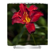 Red And Yellow Daylily  Shower Curtain