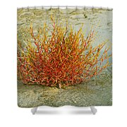 Red And Yellow Desert Color Shower Curtain