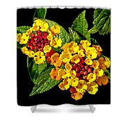 Red And Yellow Lantana Flowers With Green Leaves Shower Curtain
