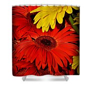 Red And Yellow Glory - The Flowers Of Summer - Gerbera Daisies Shower Curtain