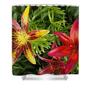 Red And Yellow Lilly Flowers In The Garden Shower Curtain