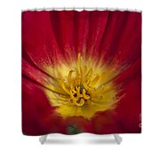 Red And Yellow Poppy 1 Shower Curtain