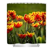 Red And Yellow Tulips II Shower Curtain