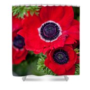 Red Anemone. Flowers Of Holland Shower Curtain