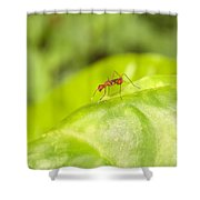 Red Ant On Green Leaf Shower Curtain