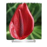 Red Anthurium #2 Shower Curtain