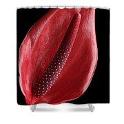 Red Anthurium #3 Shower Curtain