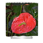 Red Anthurium Flower Shower Curtain
