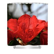 Red April Shower Curtain
