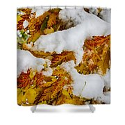 Red Autumn Maple Leaves With Fresh Fallen Snow Shower Curtain