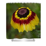 Red Band Shower Curtain