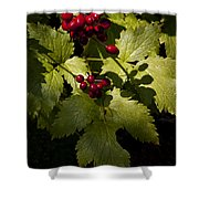Red Baneberry   #8955 Shower Curtain