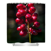 Red Baneberry   #8986 Shower Curtain