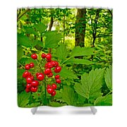 Red Baneberry Along Rivier Du Nord Trail In The Laurentians-qc Shower Curtain