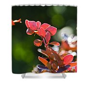 Red Barberry Shower Curtain