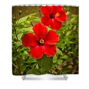 Red - Beautiful Hibiscus Flowers In Bloom On The Island Of Maui. Shower Curtain