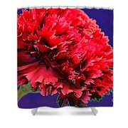 Red Beauty Carnation Shower Curtain
