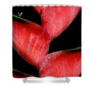 Red Beauty - Heliconia Shower Curtain