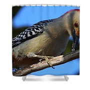 Red-bellied Woodpecker Catching Grub Shower Curtain