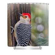 Red-bellied Woodpecker Shower Curtain