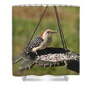 Red Bellied Woodpecker - Melanerpes Carolinus Shower Curtain