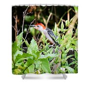 Red Bellied Woodpecker Shower Curtain