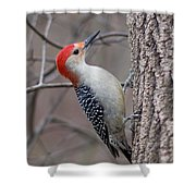 Red Bellied Woodpecker Pose Shower Curtain