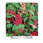 Red Berries And Green Leaves Shower Curtain