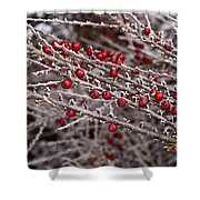 Red Berries Covered In Snow Shower Curtain