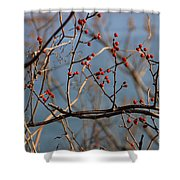 Red Berries Shower Curtain